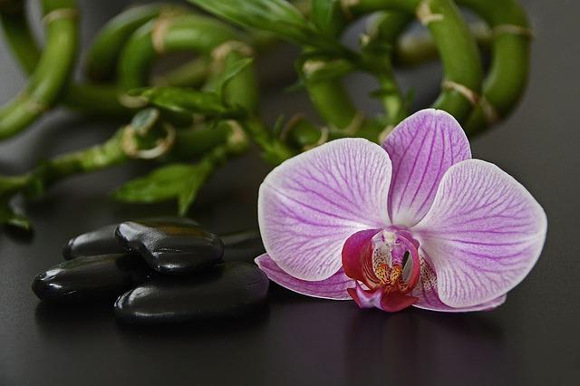 orchidej a bambus