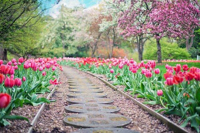 Stezka uprostřed tulipánů